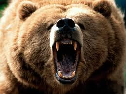 Are you a Mama Grizzly? Do you give your kids more help than they need?